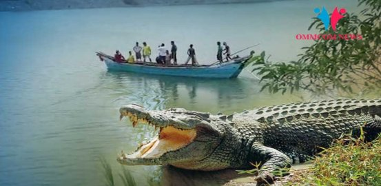 Youth Goes Missing After Being 'Dragged' By Crocodile In Kendrapara