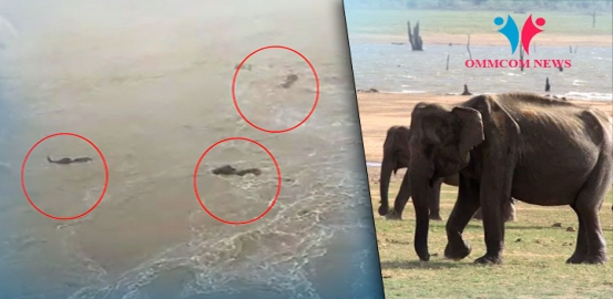 Watch: Herd Of Elephants Being Swept Away In Mahanadi River