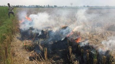 Photo of Delhi's Air Quality To Turn 'Poor' As Stubble Burning Increases