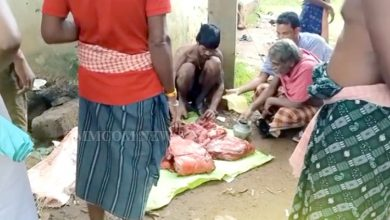 Photo of Viral Video Depicts Unhindered Poaching Of Wild Boar & Meat Sale In Khordha
