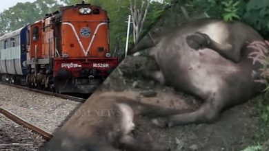 Photo of 24 Buffaloes Mowed Down By Train
