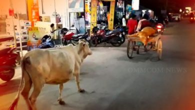 Photo of Watch: Mother Cow Behind Trolley Rickshaw Rushing Injured Calf To Vet Hospital