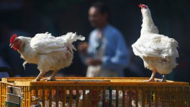Photo of Iraq Reports Bird Flu Outbreak