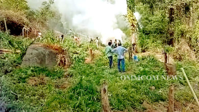 Photo of Rayagada Police Destroys 70 Acres Of Cannabis Plantation