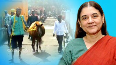 Photo of Maneka Gandhi Intervenes To Rescue Abandoned Horse In Paradeep