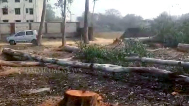 Photo of Bargarh Panchayat College Campus Trees Felled, FIR Filed, Probe Sought