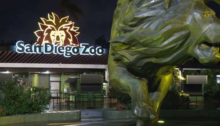 9 Apes At San Diego Zoo Get Covid Vax - Ommcom News